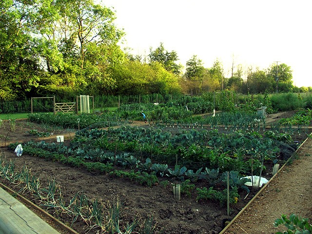 How Did Allotments Start