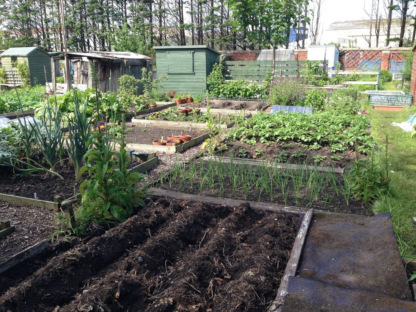 Although There Are No Official Guidelines Dictating The Size An Allotment Should Be Accepted Is Roximately 250 Square Metres