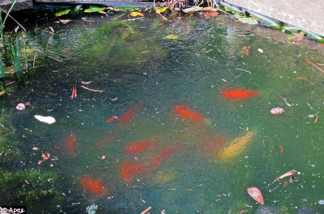January gardening calendar mantis uk expect big things for Pond fish uk