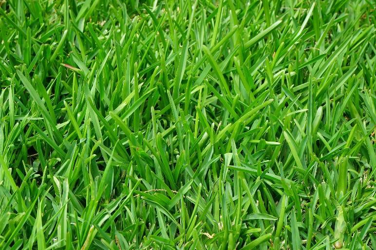 10 - lawn shears - public domain