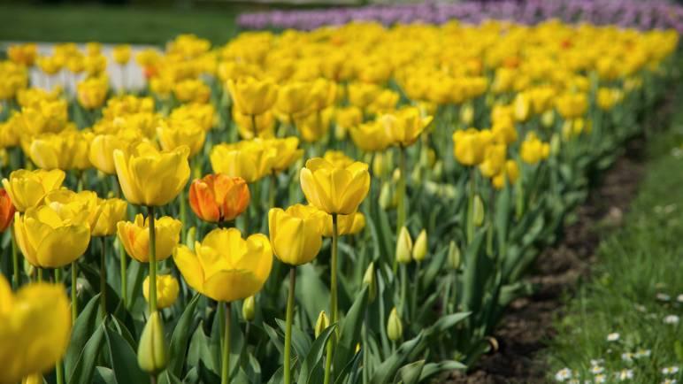 12 - yellow flowers - public domain