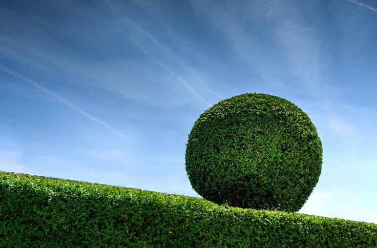 19 - topiary - public domain