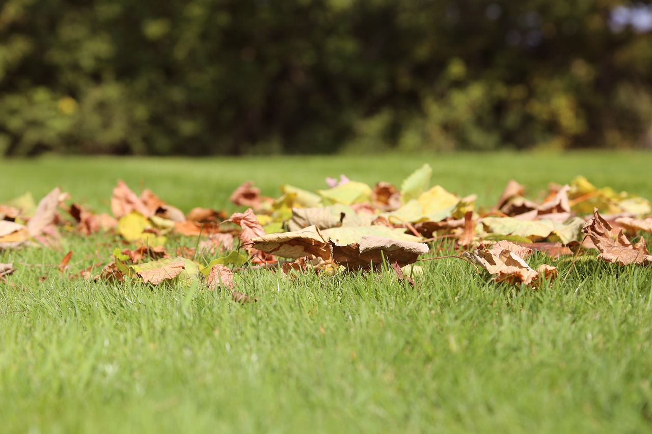 Autumn lawn care tips mantis uk expect big things for How often should you mow your lawn