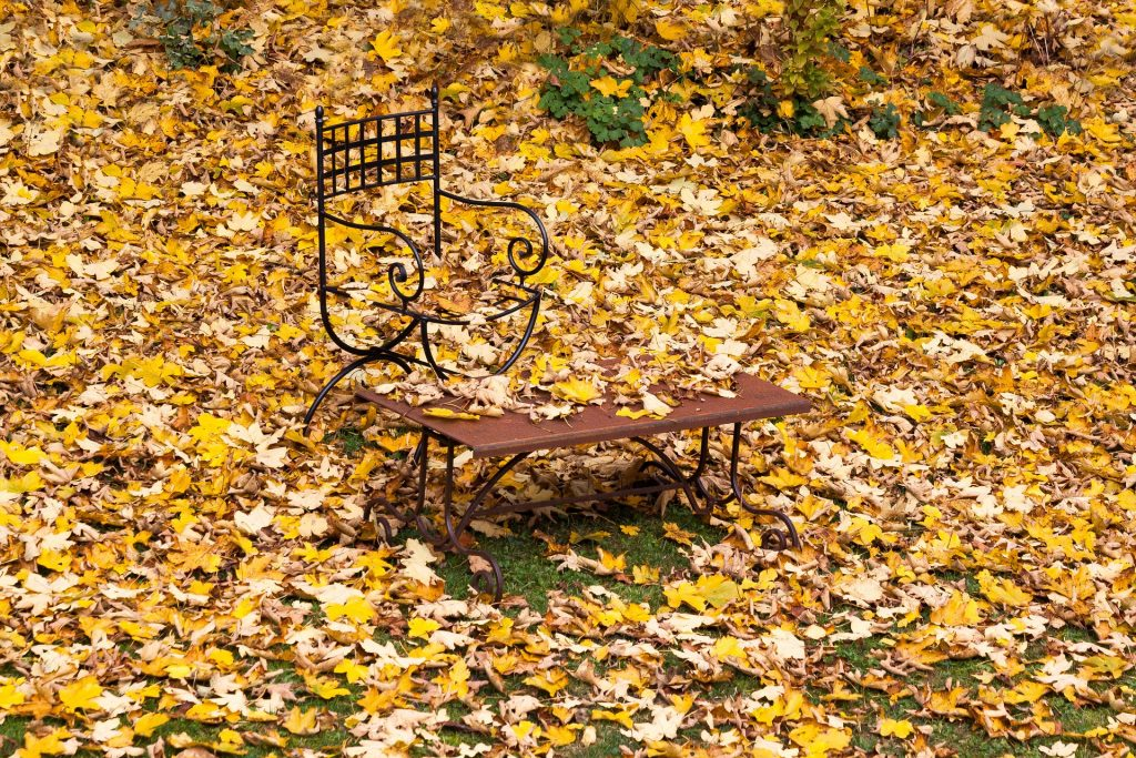 Chair in leaves