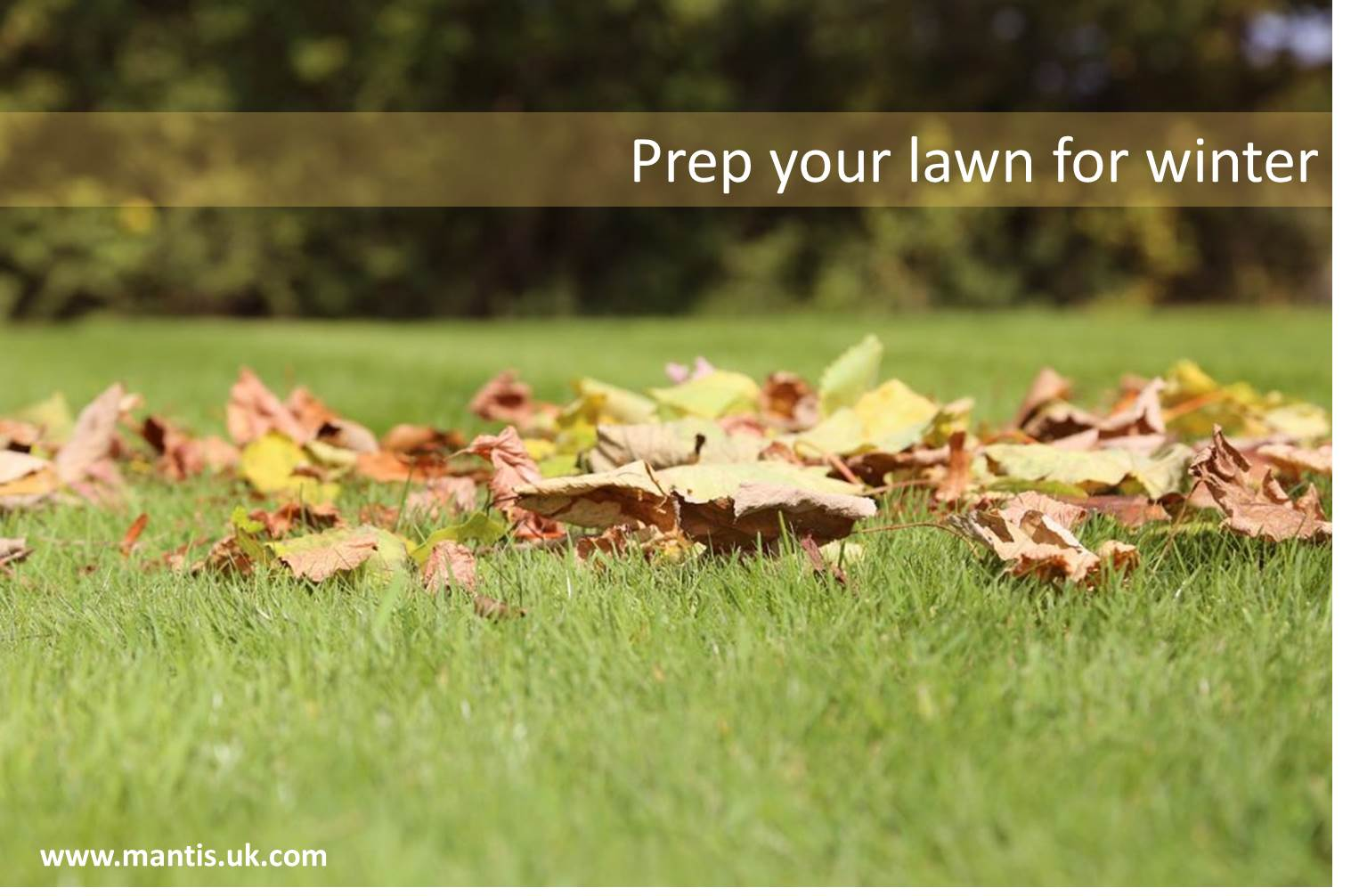 Autumn lawn care tips mantis uk expect big things - Winter lawn care advice ...