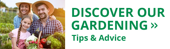 Get our latest gardening tips