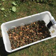 mantis-gartenhaecksler-1