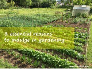 essential reasons to indulge in gardening