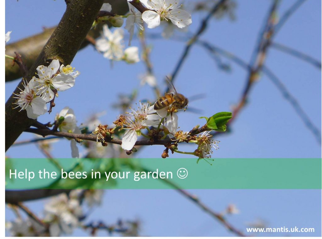 Help the bees in your garden, now
