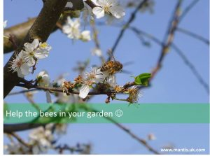 how to help the bees and pollinators in the garden