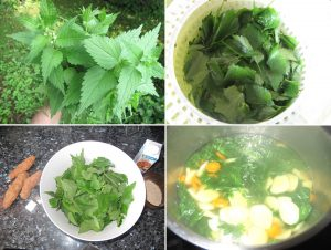 wild plant cooking how to cook a nettle soup