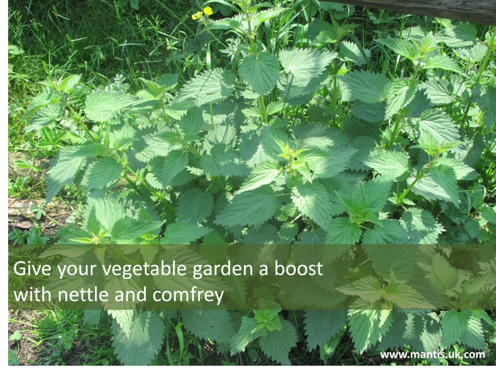 Nettle and comfrey: the perfect organic treatment in spring