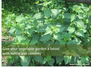 organic gardening with nettle manure and comfrey manure