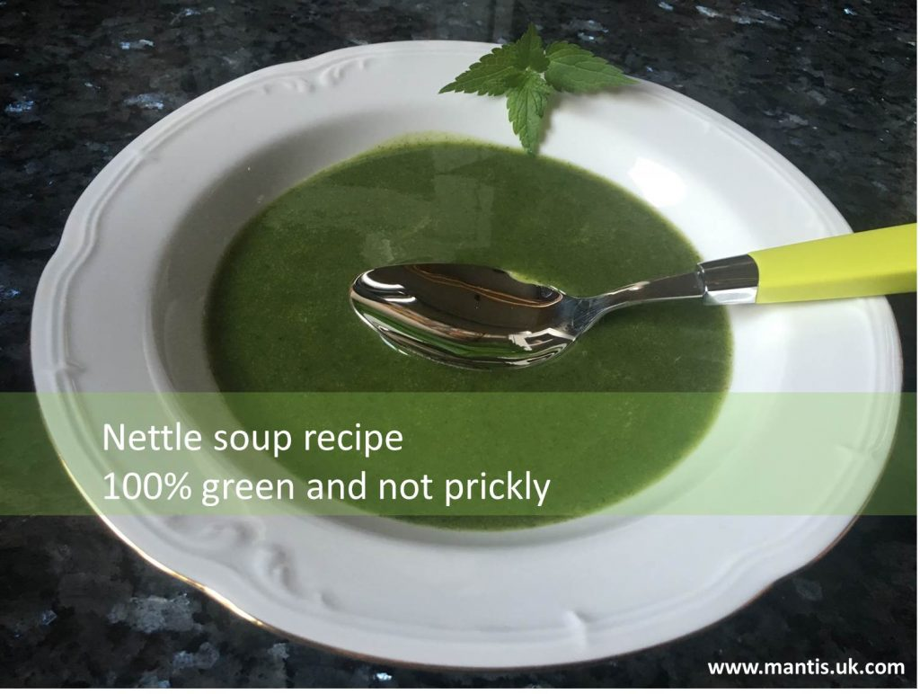 Nettle soup recipe – 100% green (and not prickly)