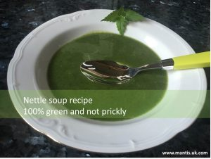 cooking with wild plants nettle soup