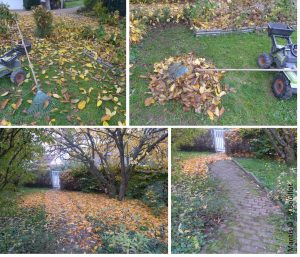 autumn leaves tidy up your garden