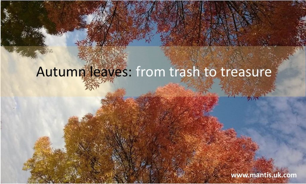 Recycling fallen leaves: from trash to treasure